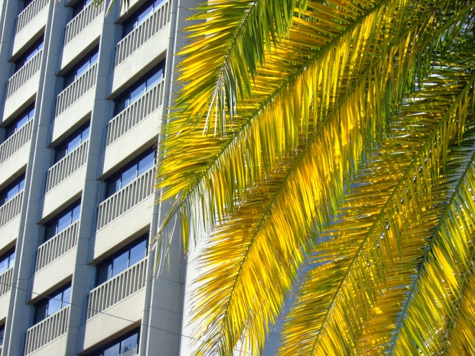 Palm tree skyscraper