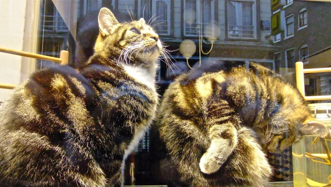 Cats in the Window 2