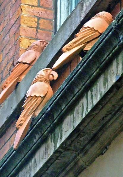 Tib Street terracotta parrots