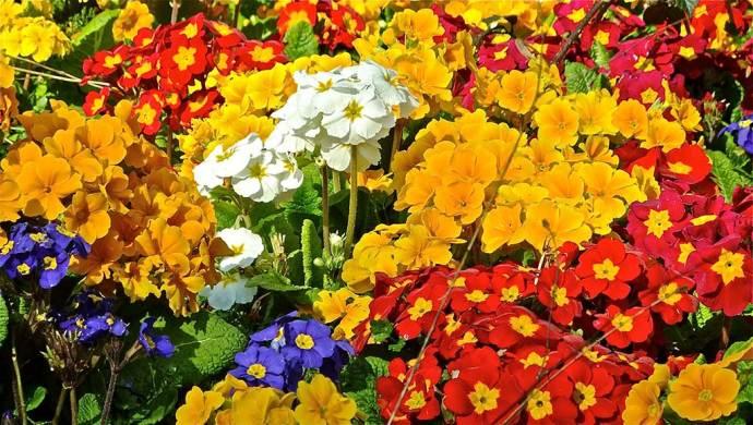 flowers heaton park manchester