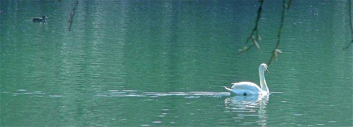 swan lake heaton park manchester