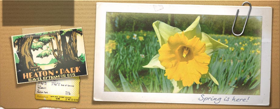 vibes header collage heaton park daffodil