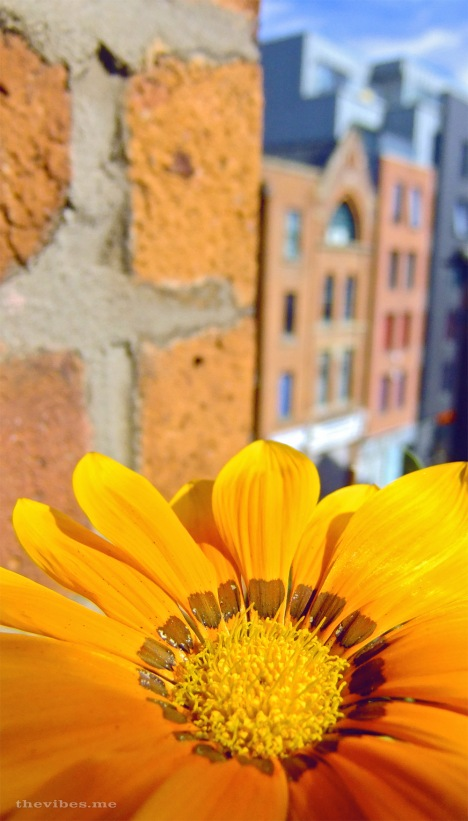Autumn flower in the city