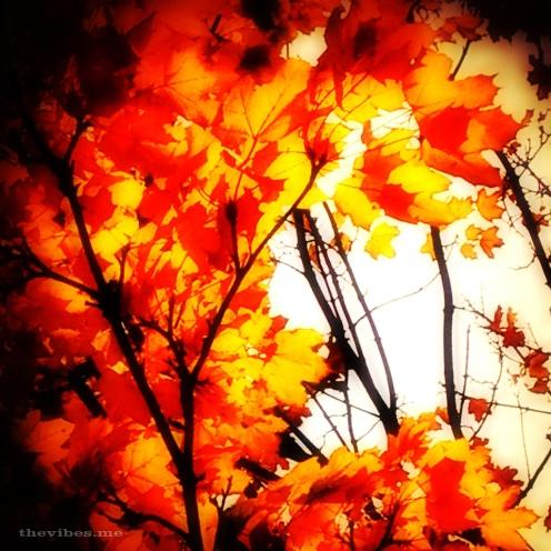 Fiery Autumn Leaves