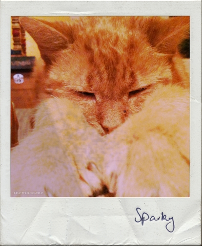 ginger cat sleeping polaroid the vibes