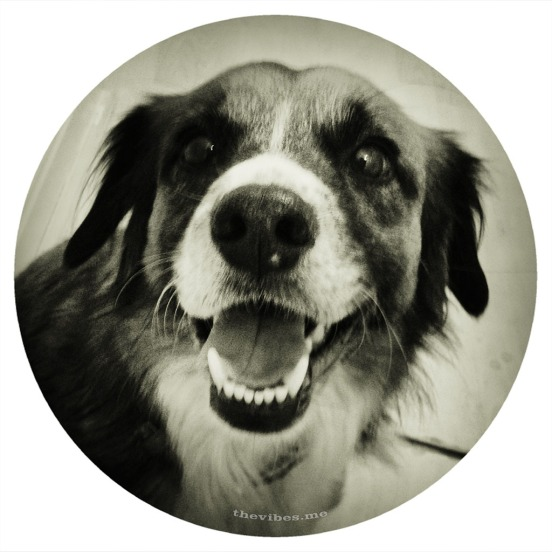 Happy Bob, my neighbour's dog