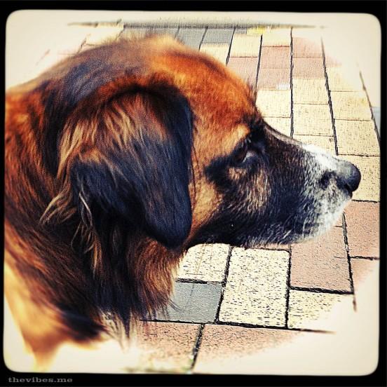 bob my neighbour's dog