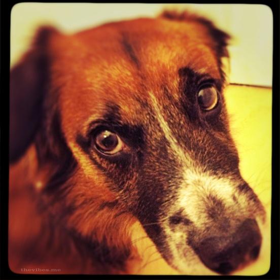 Naughty Bob, My neighbours dog