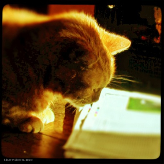 Sparky the ginger cat reads the newspaper