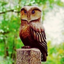 Alderley Owl