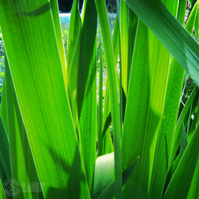 Reeds cleveleys allotment chorlton