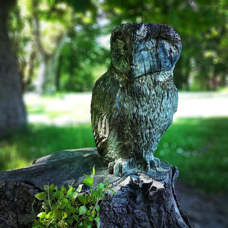 Carved wooden owl Chorlton Park