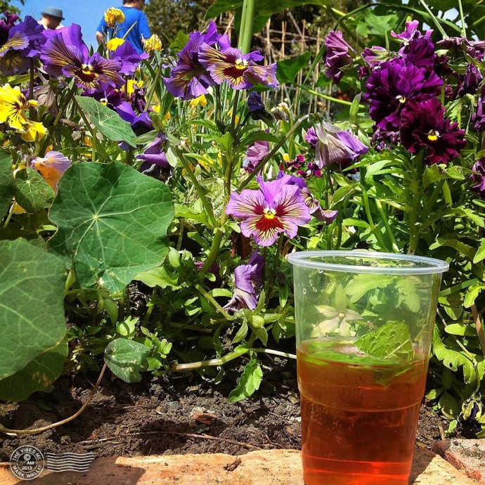 Pimm's on Cleveleys allotment chorlton