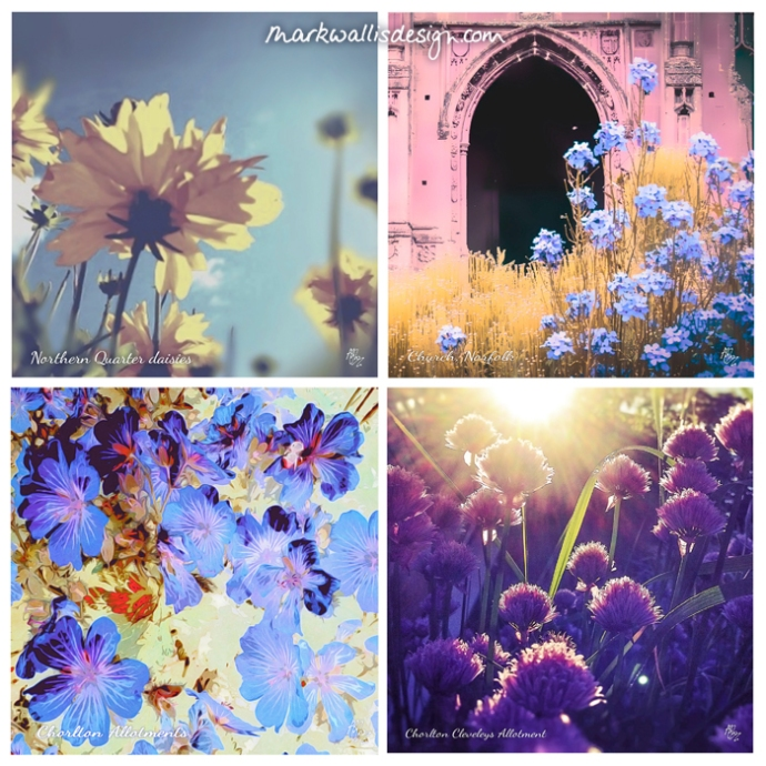 Mark Wallis Design Blooming Summer greetings cards